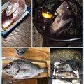 keikichiさんのスズキの釣果写真