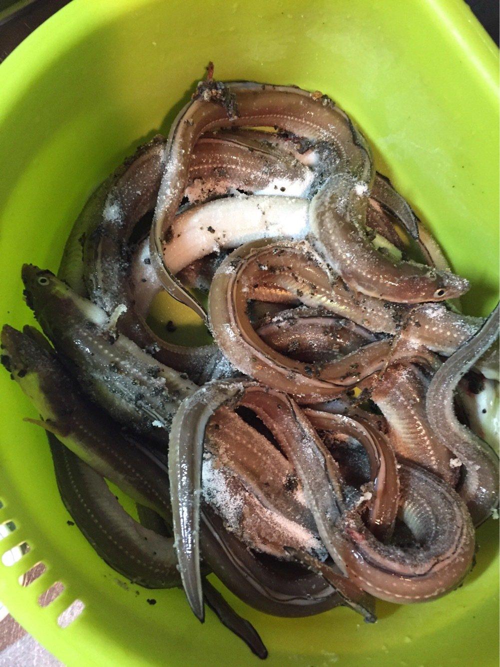 makashiさんの投稿画像,写っている魚はアナゴ