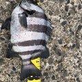 釣りバカ41さんの茨城県鹿嶋市での釣果写真