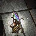 ただし。さんの神奈川県でのイイダコの釣果写真
