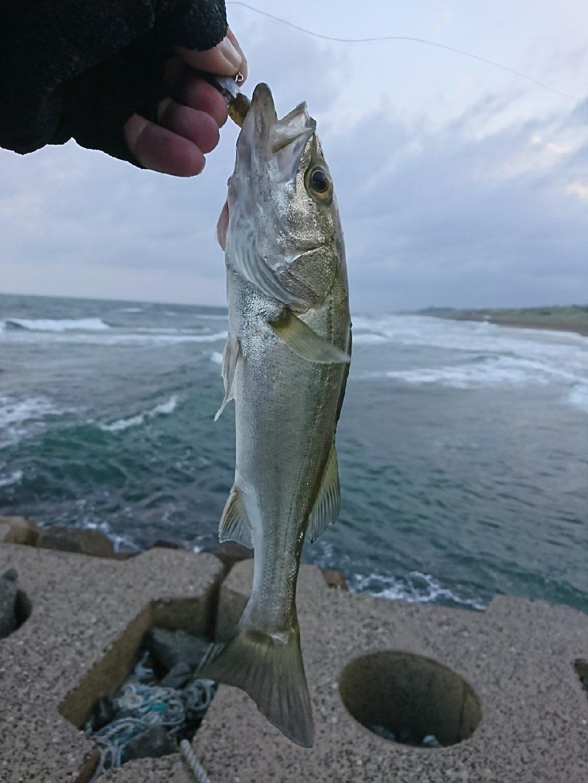 みっちぃさんの投稿画像,写っている魚はスズキ