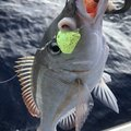 yoshiさんの沖縄県でのフエフキダイの釣果写真