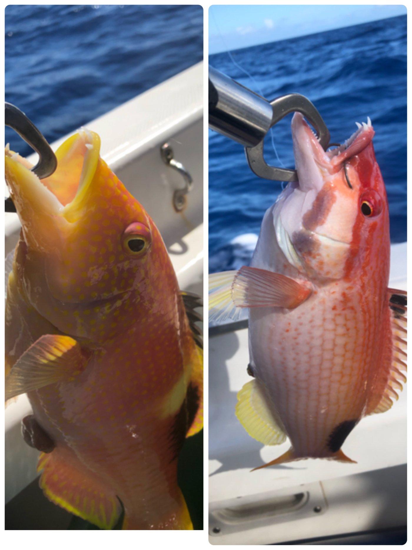 yoshiさんの投稿画像,写っている魚はタキベラ