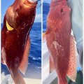 yoshiさんの沖縄県島尻郡での釣果写真