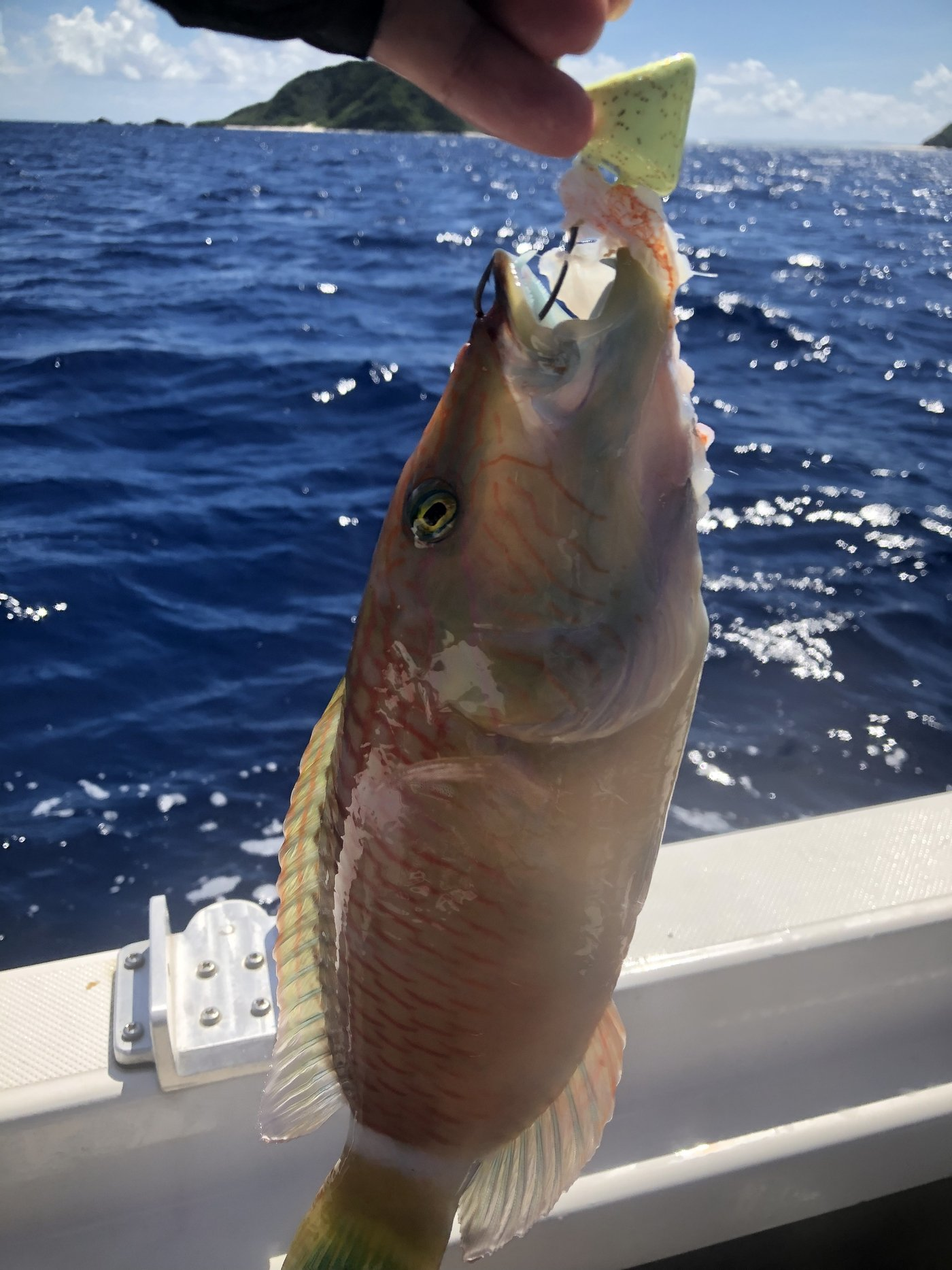 yoshiさんの投稿画像,写っている魚は