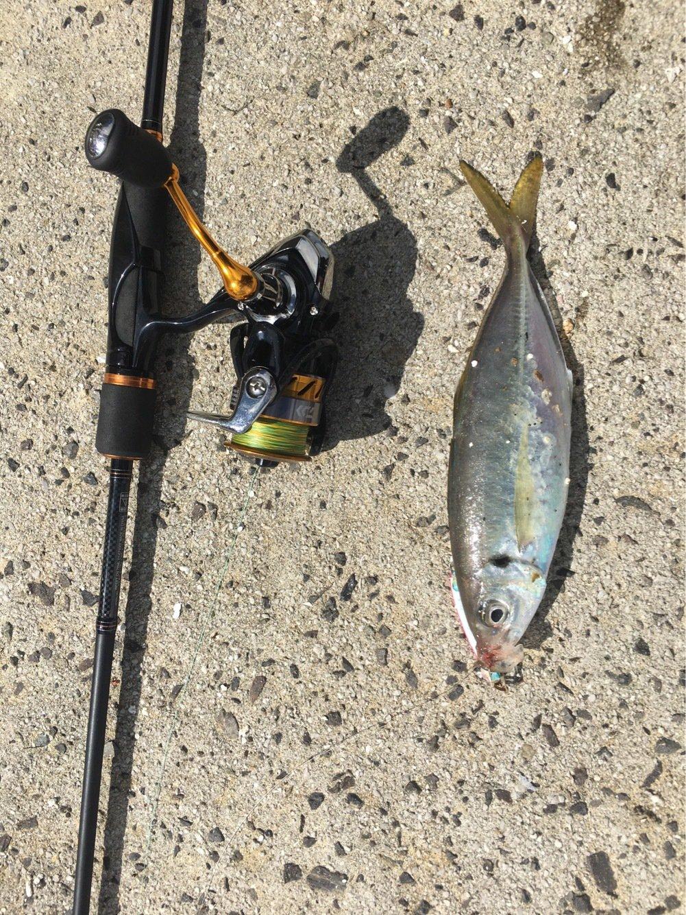 うきさんの投稿画像,写っている魚はアジ