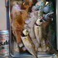 リンたんさんの新潟県糸魚川市での釣果写真