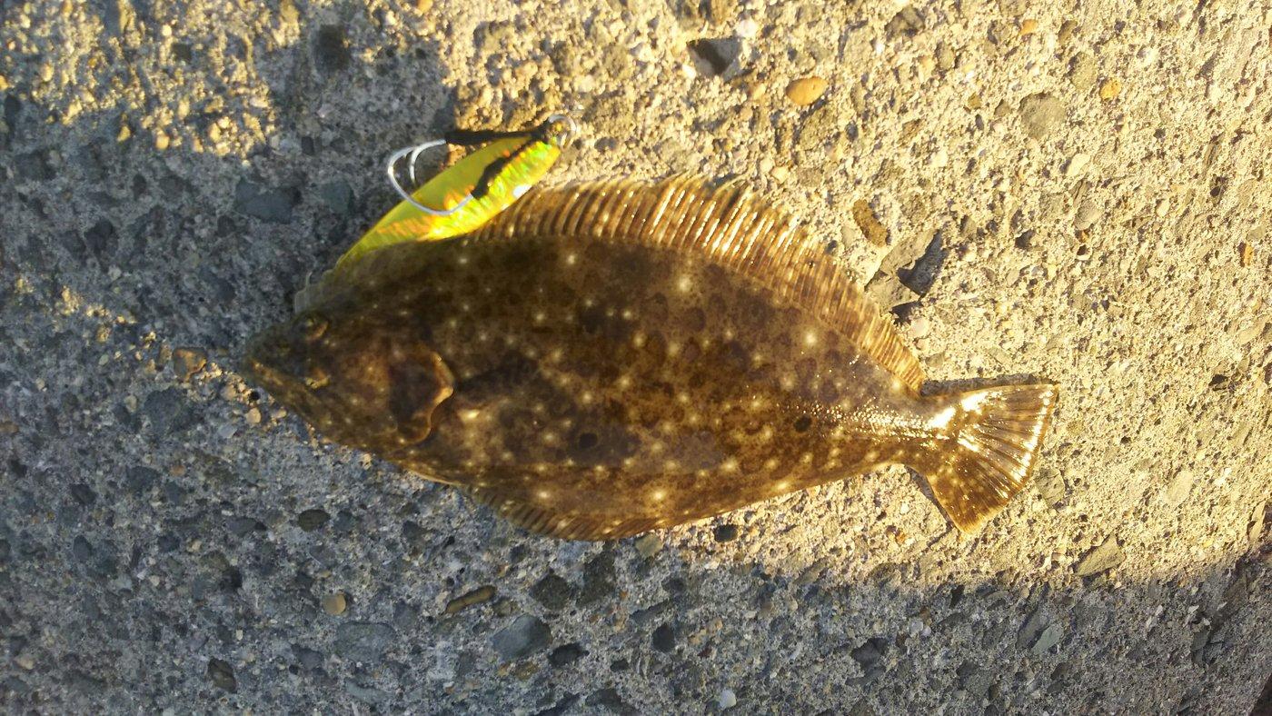 かずくんさんの投稿画像,写っている魚はヒラメ