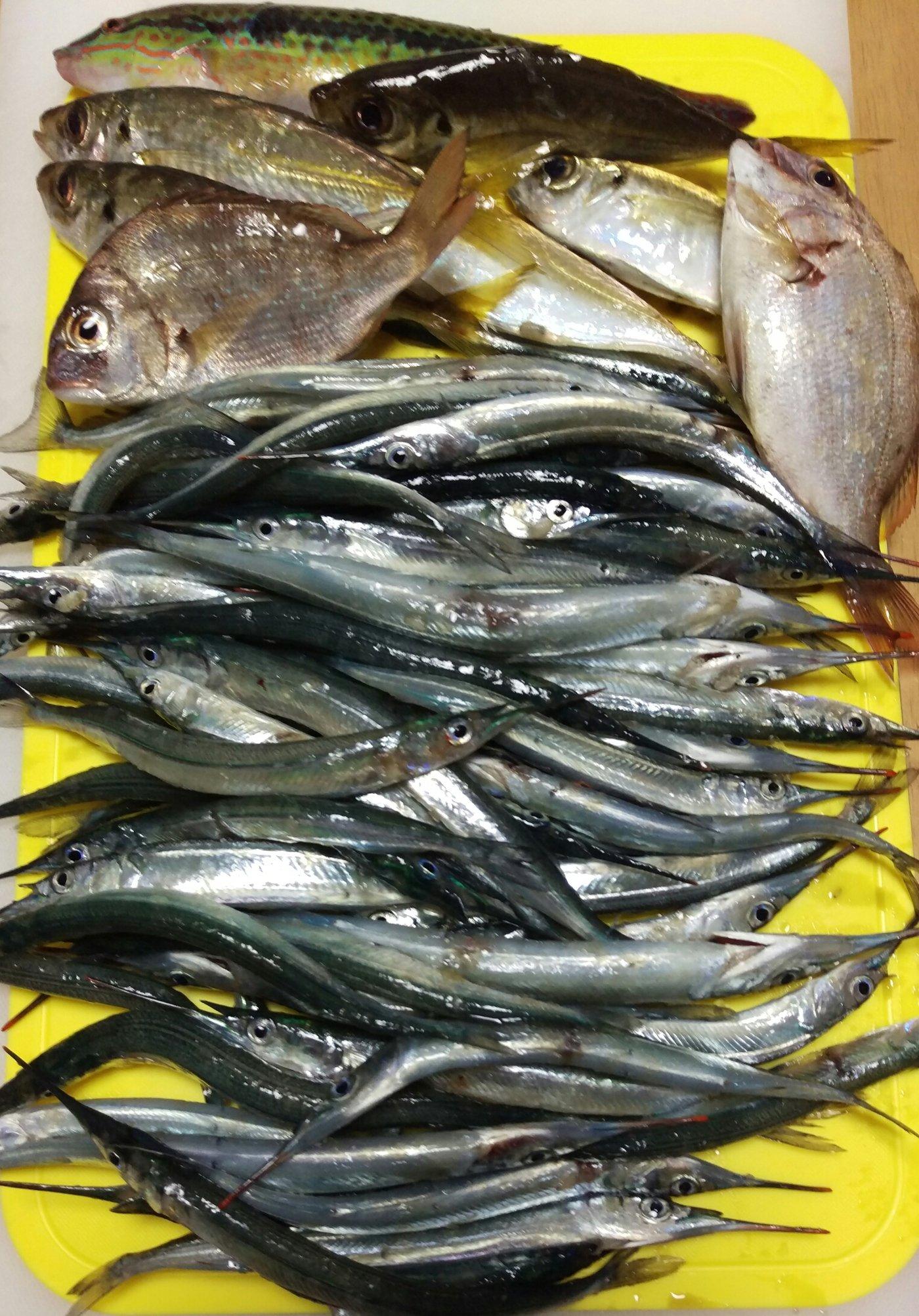 古藤さんの投稿画像,写っている魚はサヨリ