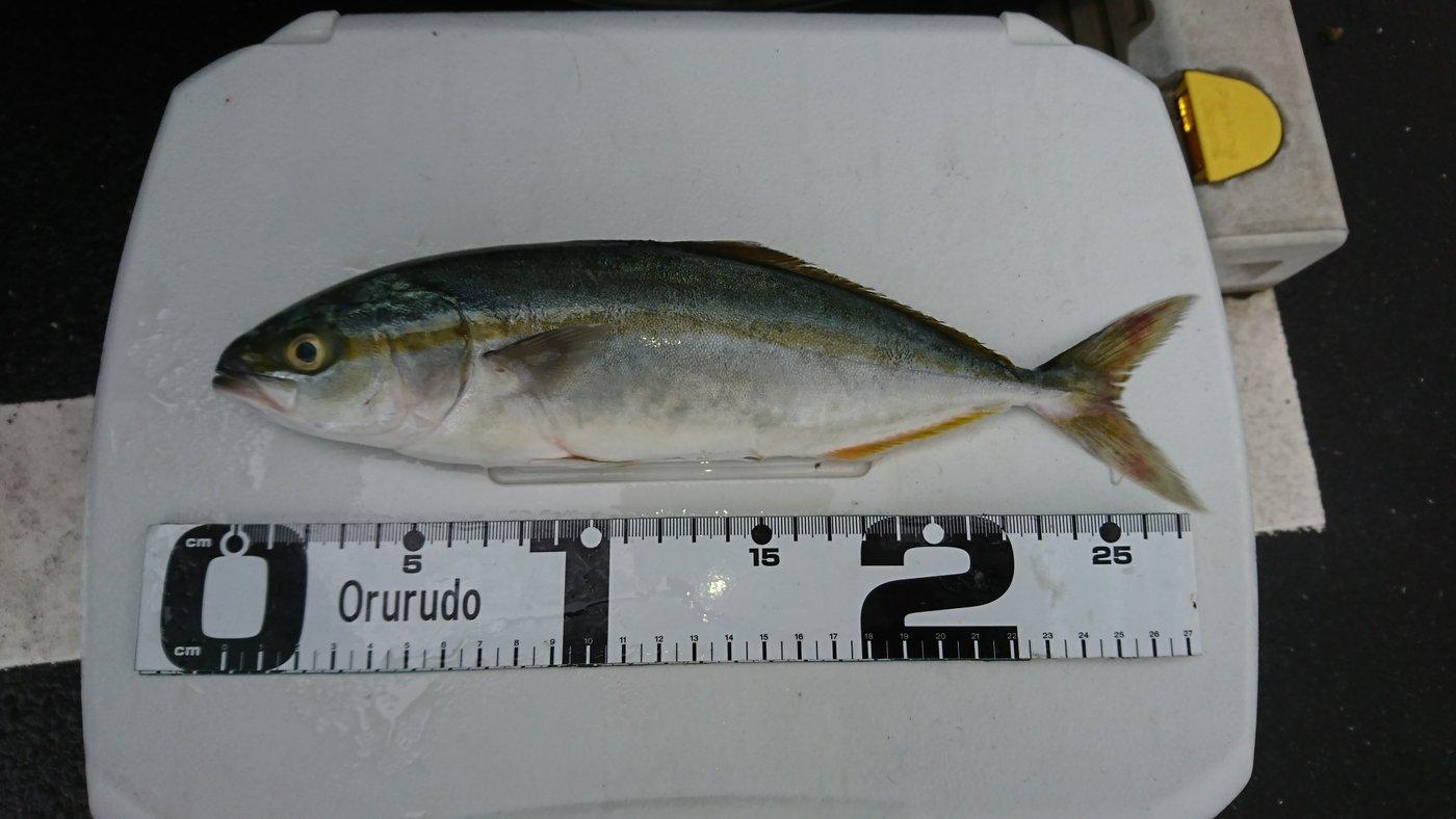 チュンチュン丸さんの投稿画像,写っている魚は
