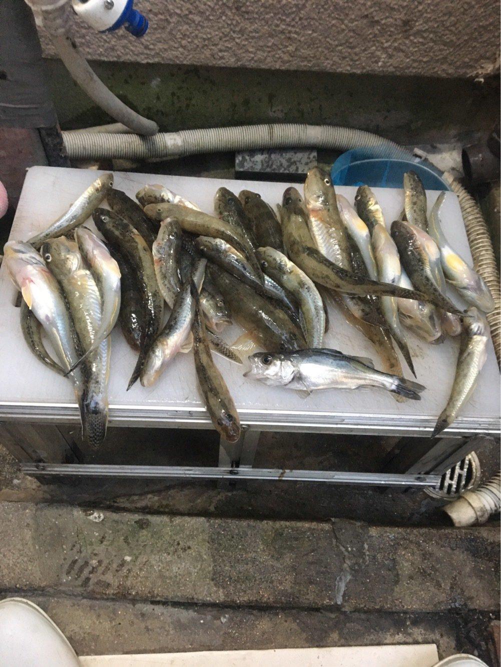 Yuuuuuuukiさんの投稿画像,写っている魚はマハゼ