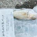ゆめさんの高知県須崎市での釣果写真