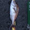 高原 清史さんの岡山県玉野市での釣果写真