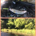 カズさんの長野県での釣果写真