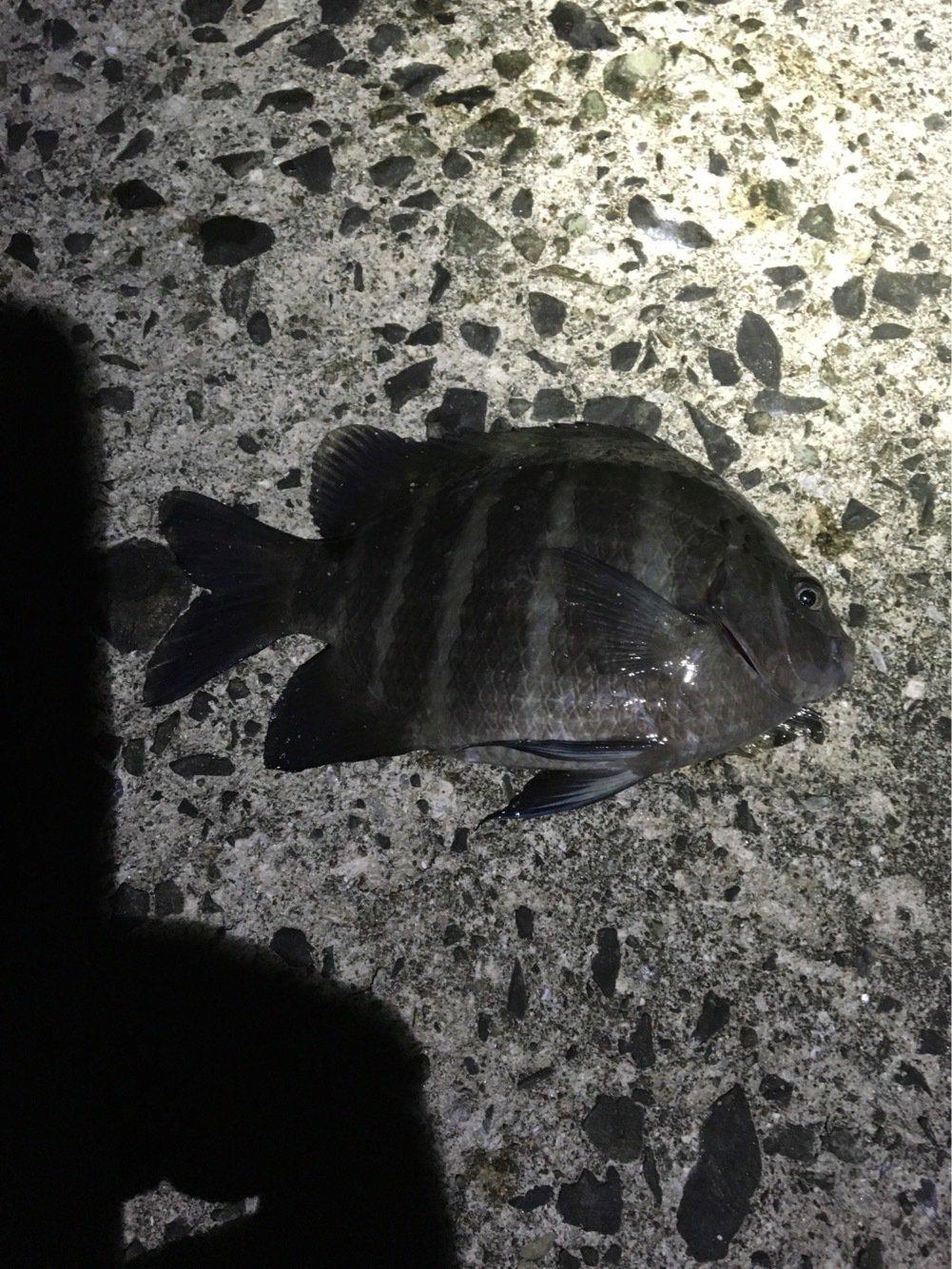 竜也さんの投稿画像,写っている魚は