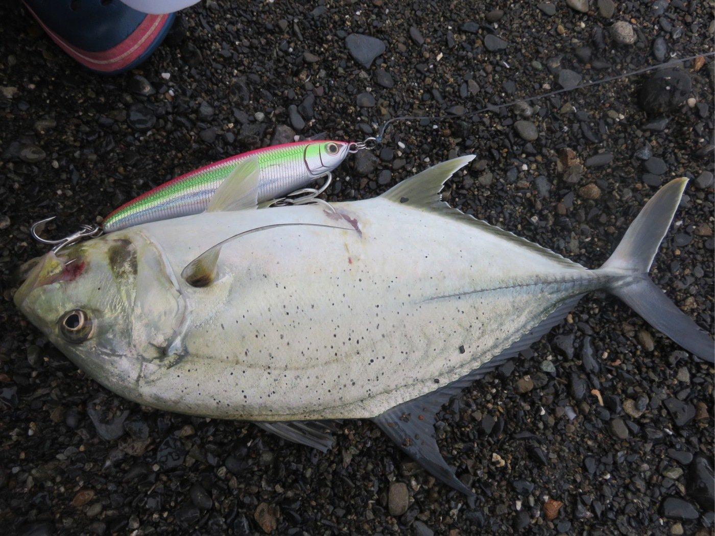 仁科哲洋さんの投稿画像,写っている魚はオニヒラアジ