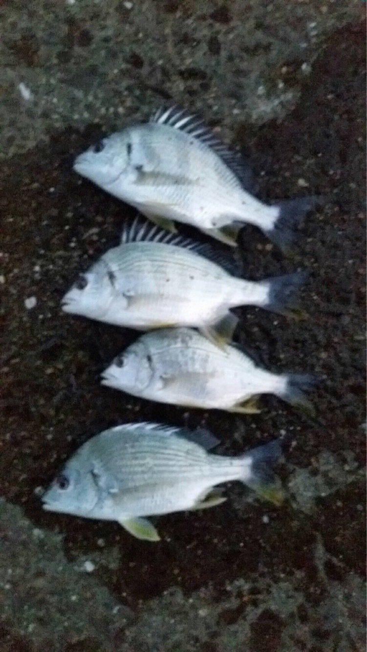 ビッケさんの投稿画像,写っている魚は