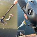 いぶさんの兵庫県神戸市でのマサバの釣果写真