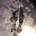 釣り初心者さんのタケノコメバルの釣果写真