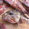 まっつんさんの鳥取県岩美郡での釣果写真