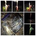 ぎーちゃんさんの兵庫県でのケンサキイカの釣果写真