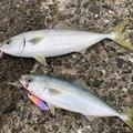 サーーラさんの高知県室戸市での釣果写真