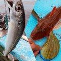 まさしさんの神奈川県でのカサゴの釣果写真