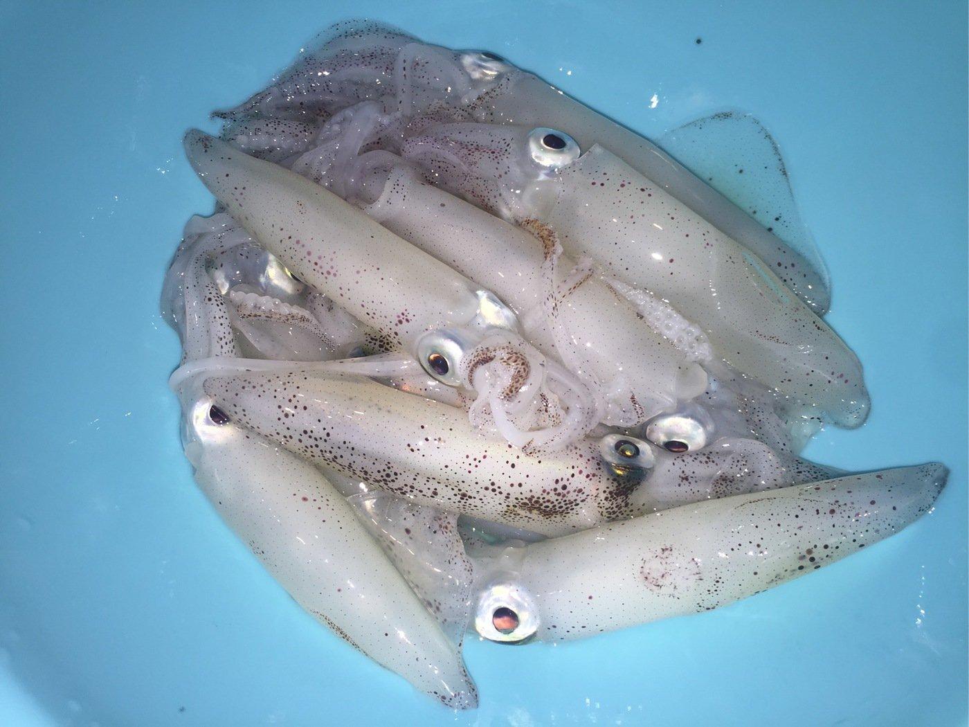 AK3さんの投稿画像,写っている魚は