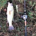釣り課長さんの香川県木田郡での釣果写真