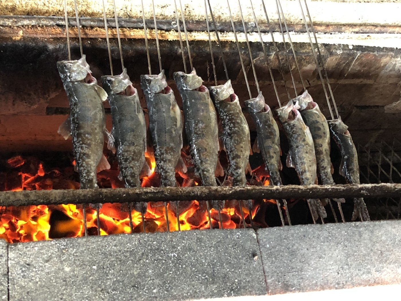 ペチャンコさんの投稿画像,写っている魚はヤマメ