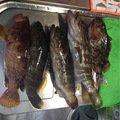 ナベさんの福岡県三井郡での釣果写真
