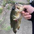 トーマスさんの茨城県鹿嶋市での釣果写真