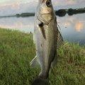 たいとさんの鹿児島県肝属郡での釣果写真