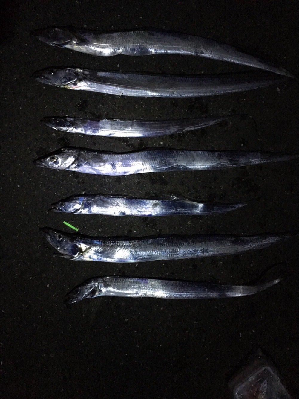 YDKさんの投稿画像,写っている魚はタチウオ