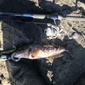 Taku Yamashitaさんのアイナメの釣果写真