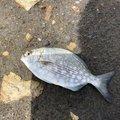 飯島   直道さんの千葉県安房郡での釣果写真