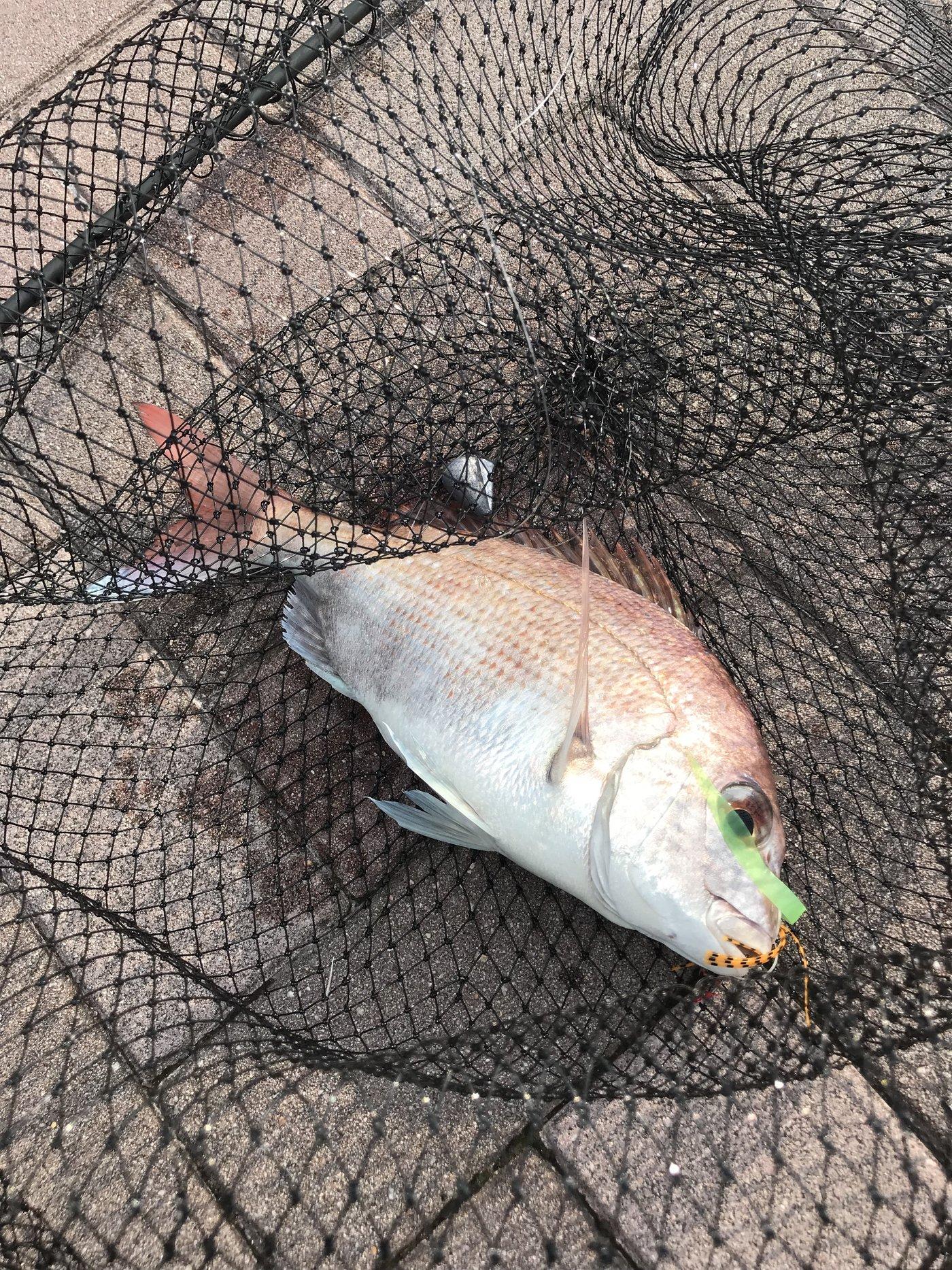 HiroHanaFishingさんの投稿画像,写っている魚はマダイ