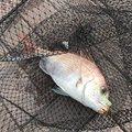 HiroHanaFisingさんの岡山県玉野市での釣果写真