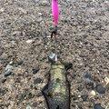 HIRO.Yさんの新潟県三島郡での釣果写真
