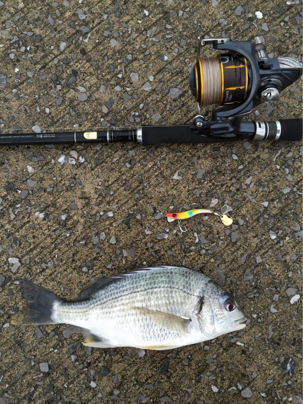 ヨウスケさんの投稿画像,写っている魚はキチヌ