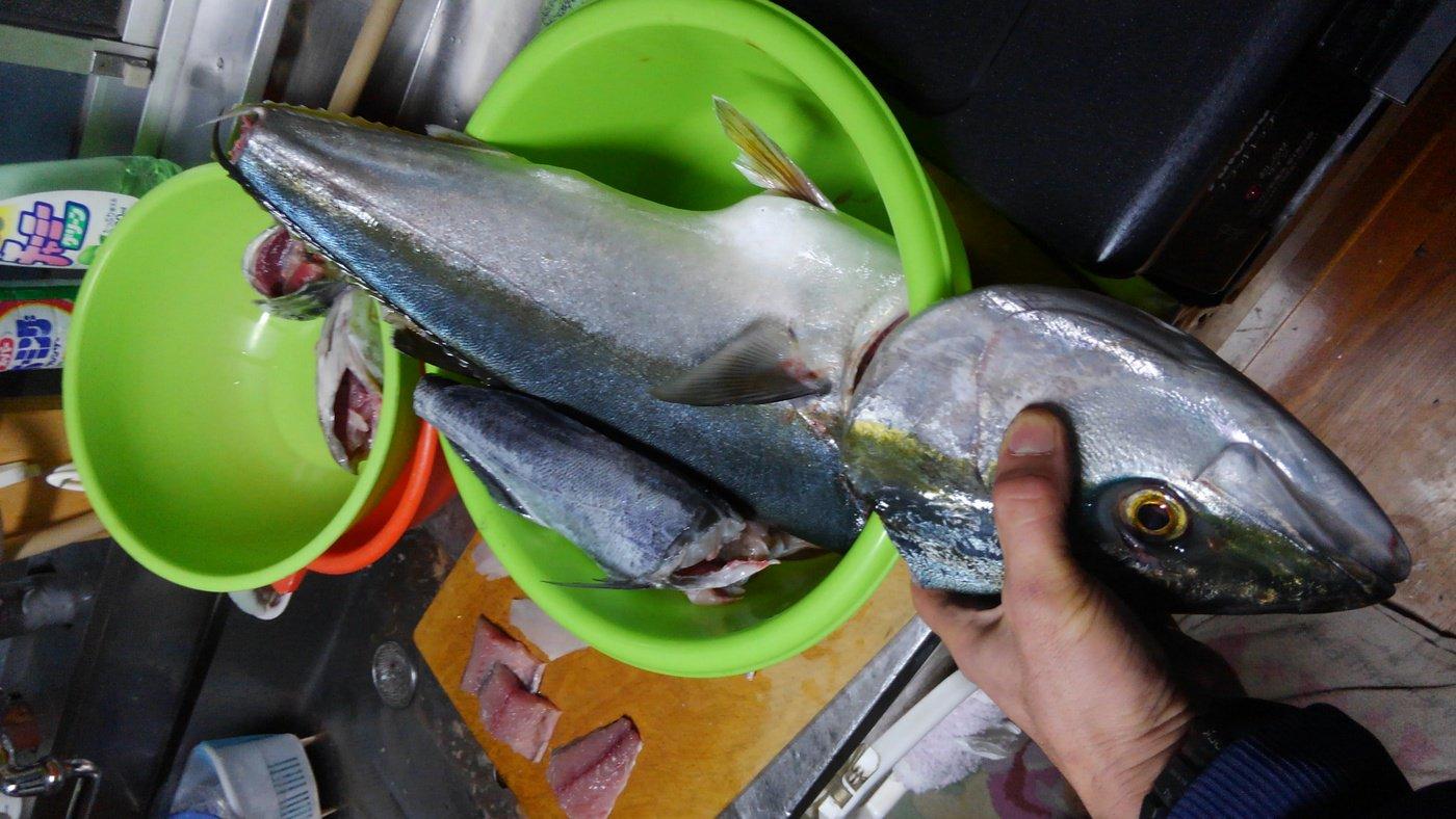 まっつまつさんの投稿画像,写っている魚はブリ