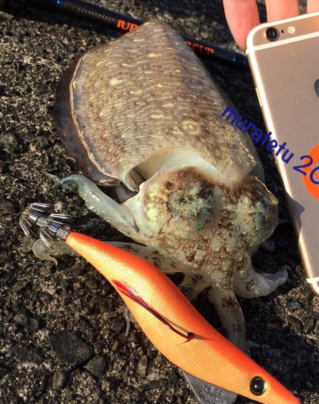 ムラテツさんの投稿画像,写っている魚は
