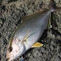 大和魂.さんの千葉県鴨川市での釣果写真