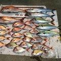 丸田海猫さんの福井県三方郡での釣果写真