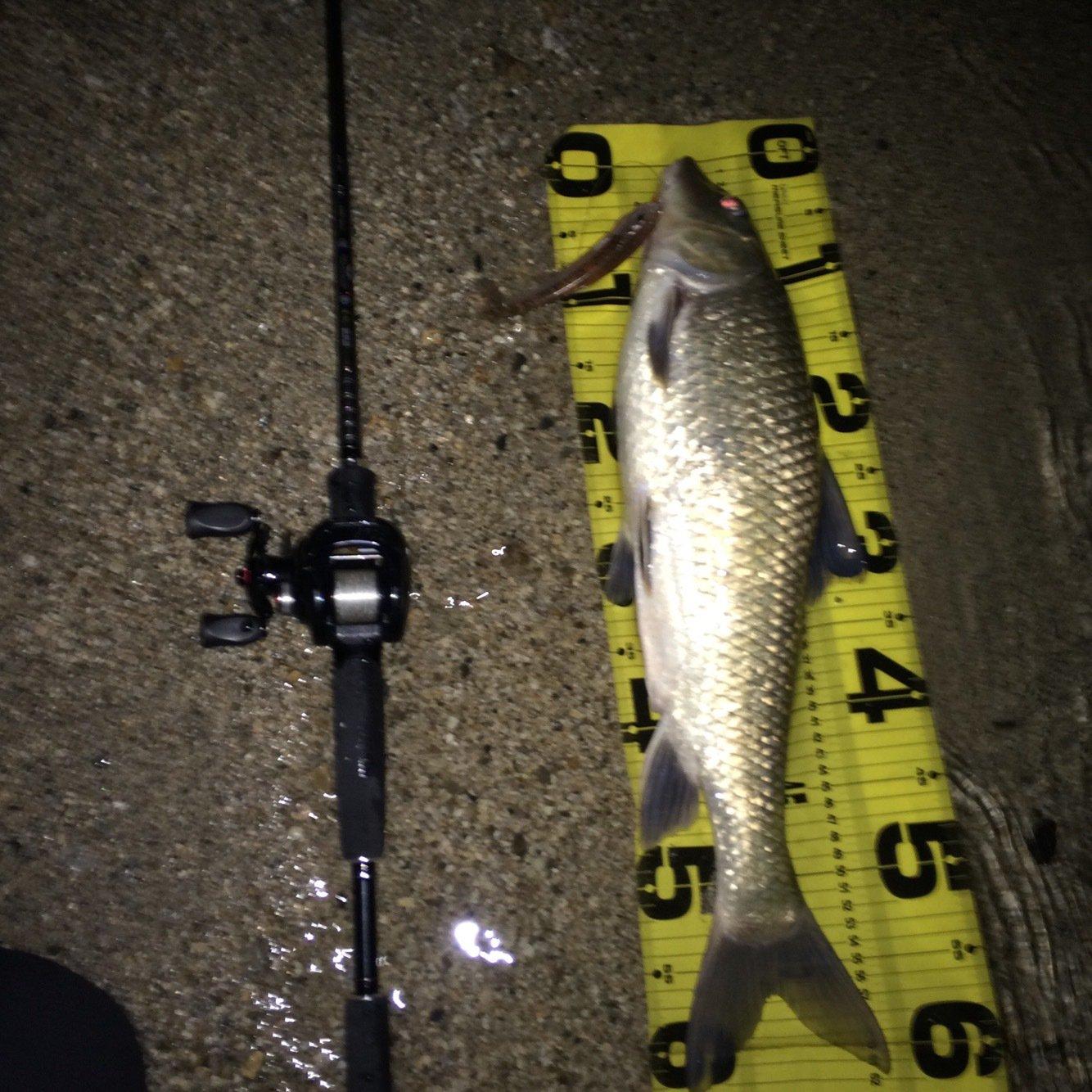 isao-fishingさんの投稿画像,写っている魚は