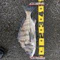 そらさんの長崎県西海市での釣果写真