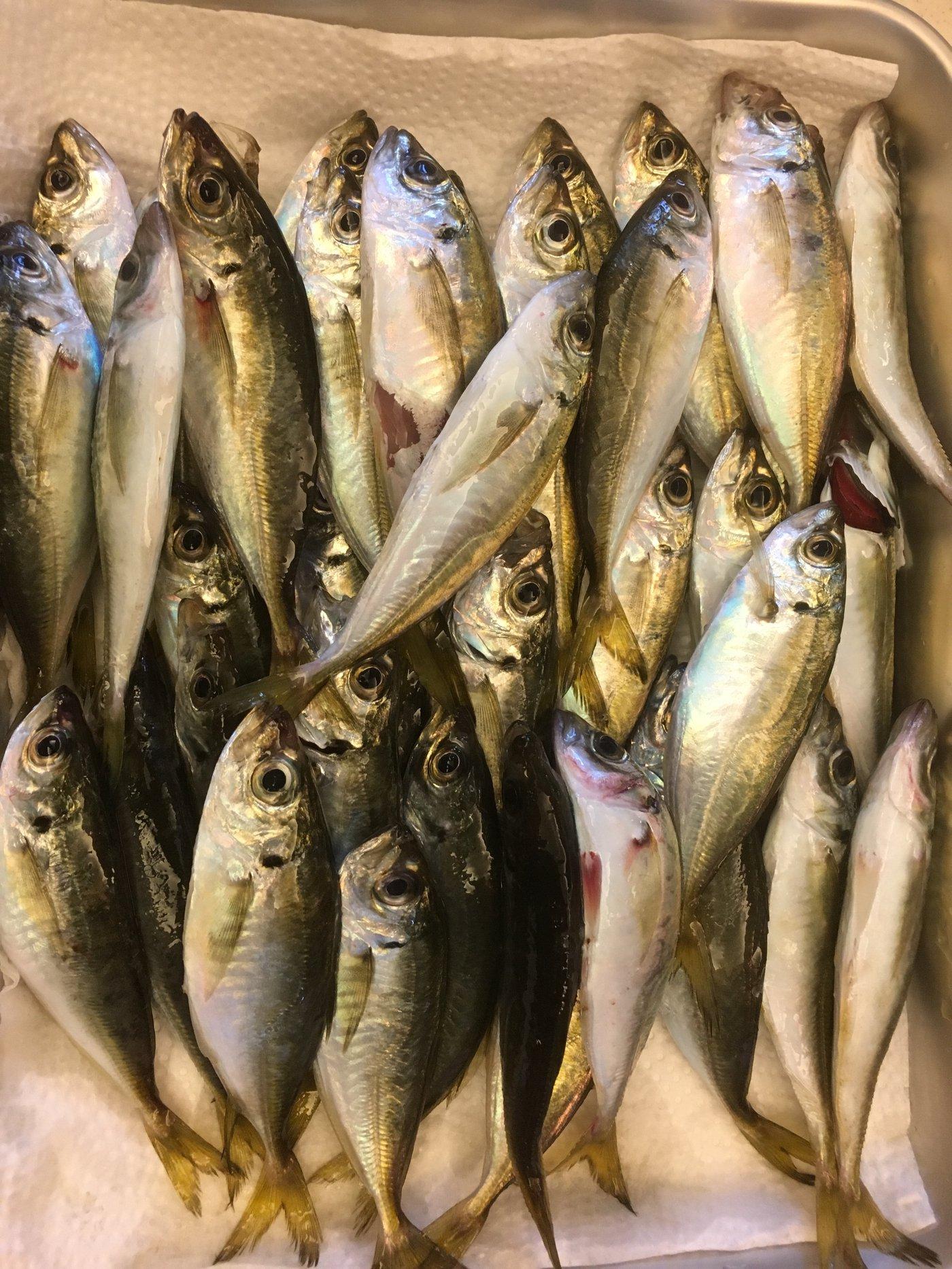 さまやんさんの投稿画像,写っている魚は