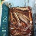 激流マニアさんのスルメイカの釣果写真