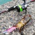 猫田大猫さんの福井県三方郡での釣果写真