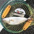 かどちゃんさんの鹿児島県出水郡での釣果写真